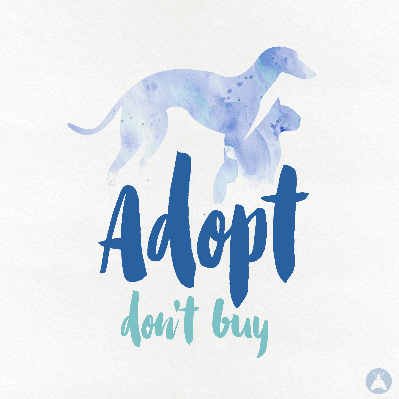 adop don buy