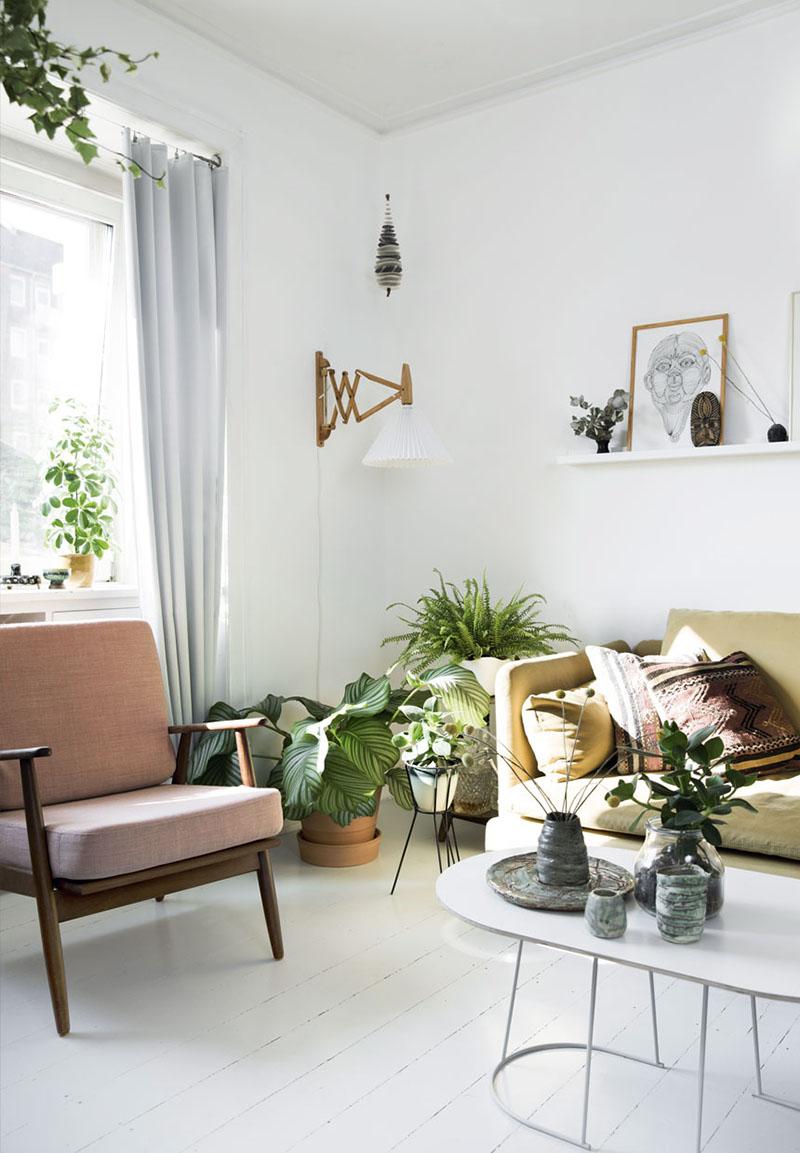plantas para interior 1
