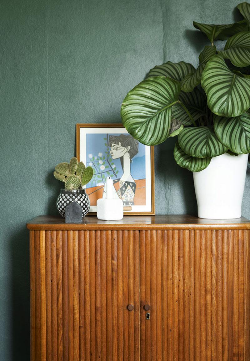 plantas para interior 10