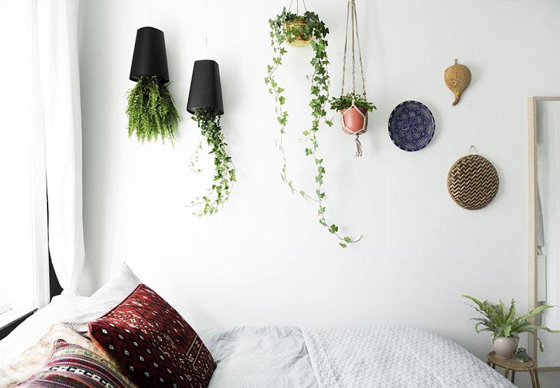 plantas para interior 7