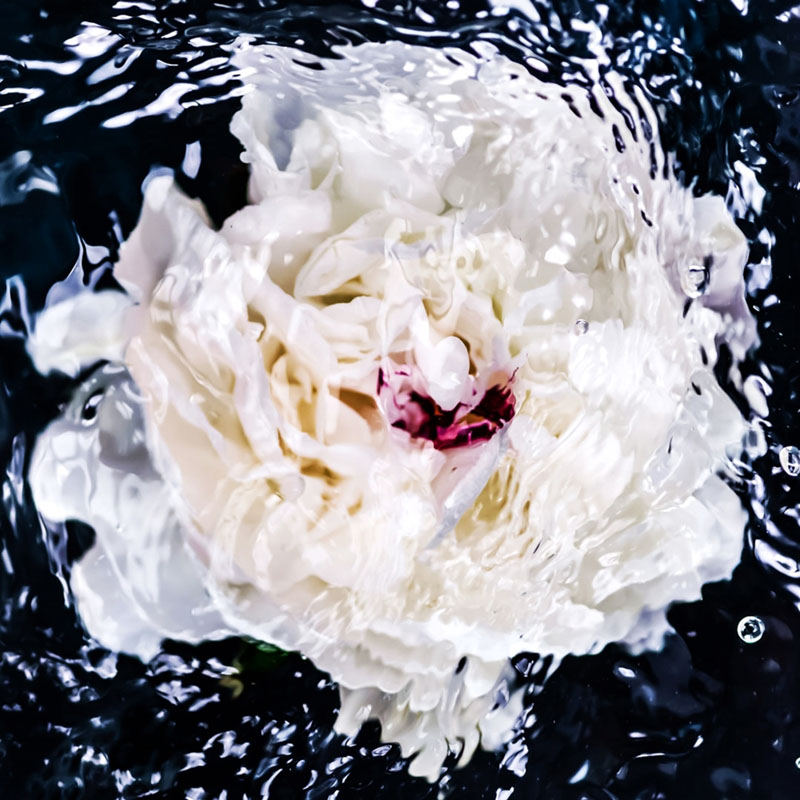 white-peony-abstract-jessica-kenyon-studio